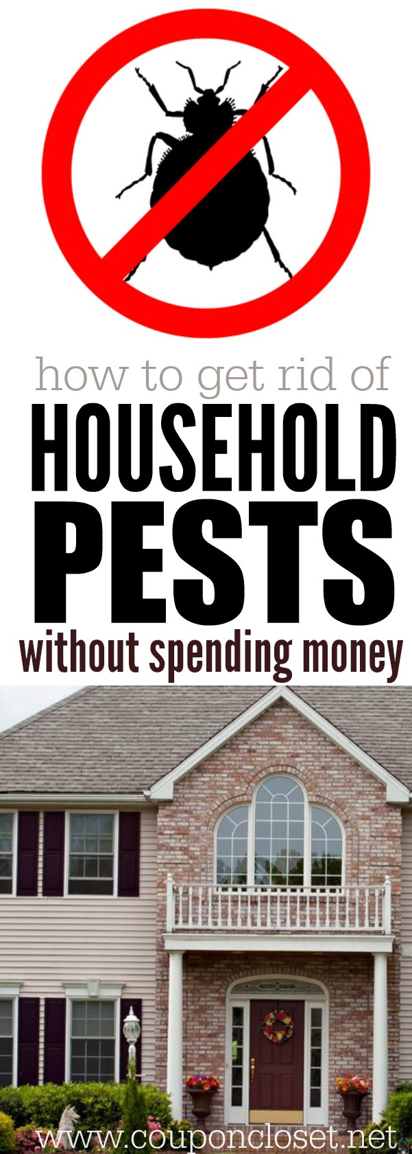 How to get rid of bugs naturally. You don't need a lot of money. Learn how to get rid of household pests without spending any money at all.