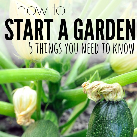 how to start a garden square