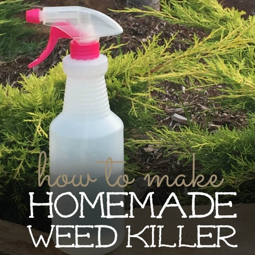 homemade weed killer square