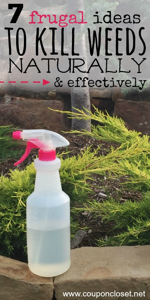 homemade weed killer that is frugal