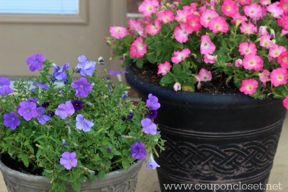 How to save on flowers for your garden. Here is my secret tip to save on flowers for your garden. Saving on flowers is easy and they can still be beautiful.