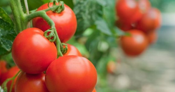 Container gardening - how to start a vegetable garden. Growing vegetables in containers is much easier than you might think. With these gardening tips, you will be starting a garden in fun container in no time!